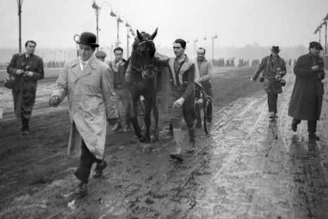 Les chevaux qui ont marqué le Prix d'Amérique | Cheval et sport | Scoop.it