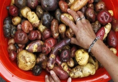 Protecting biodiversity key to food security, adaptation - expert - AlertNet | This Gives Me Hope | Scoop.it