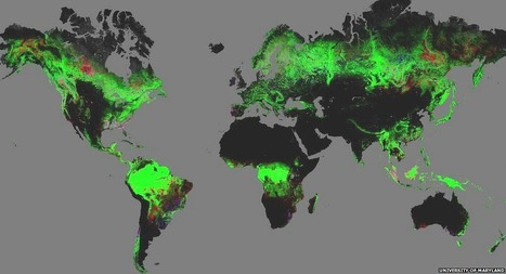 Forest change mapped by Google Earth | Geography in the classroom | Scoop.it