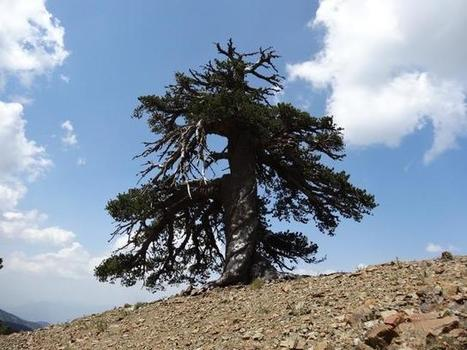 Europe's oldest known living inhabitant | News we like | Scoop.it