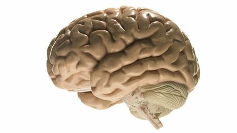 """""""Mythes over hersenen van leerlingen zijn hardnekkig"""" – Klasse   Master Leren & Innoveren   Scoop.it"""