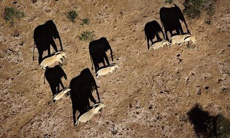 Kenya to deploy drones in all national parks in bid to tackle poaching | Wildlife Trafficking: Who Does it? Allows it? | Scoop.it