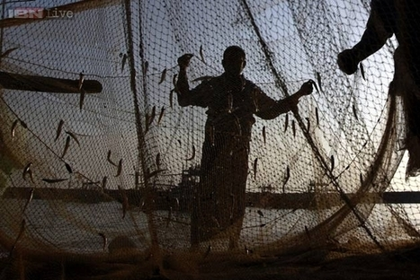 India Way Behind China in Fish Production | THE CHINA GAP | Fish in Demand -Aquaculture-and-More by Youmanitas | Scoop.it