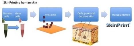 3ders.org - SkinPrint: 3D Bio-printed human skin can help burn victims | 3D Printer & 3D Printing News | Big and Open Data, FabLab, Internet of things | Scoop.it