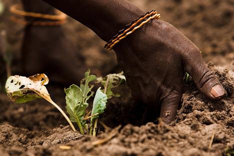 La FAO rappelle que des sols sains sont indispensables pour la production alimentaire | Chimie verte et agroécologie | Scoop.it