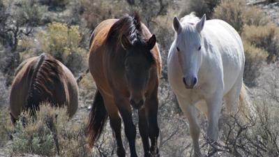 Factors to Consider When Seeking Horses for Sale | Pets - Buy Pets Online | Scoop.it