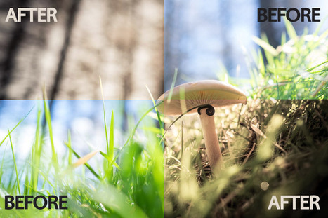 Free Lightroom Preset : Macro | Fujifilm X | Scoop.it