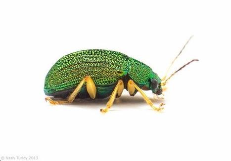 Expiscor, la sélection hebdomadaire du blog Arthropod Ecology [en anglais] | EntomoNews | Scoop.it