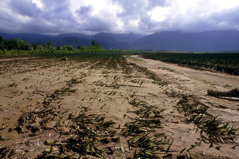 Climate change poses 'major threat' to food security, warns UN expert - UN News Centre   Latitudes   Scoop.it