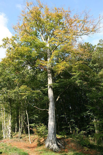 Clever Trees Won't be Fooled by a Tricky Climate - Nature World News   climatefuture   Scoop.it