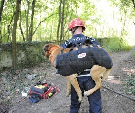 Les secours en montagne sauvent un chien tombé d'une falaise   CaniCatNews-actualité   Scoop.it