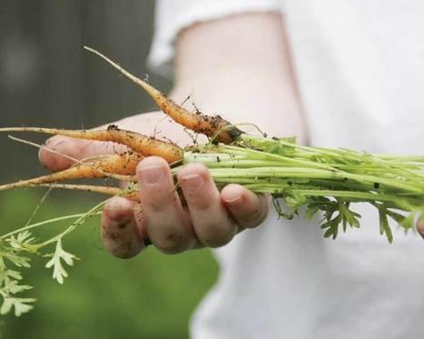 Handed-Down Harvest: Grow the Best Heirloom Varieties | Gardening | Scoop.it