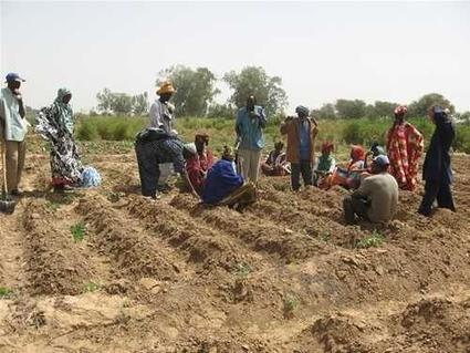 Sénégal : pour Yacine Fall, les autorités se doivent de réagir face aux accaparements des terres agricoles | Questions de développement ... | Scoop.it