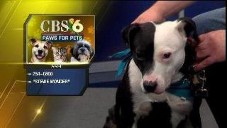 Paws for Pets – Stevie Wonder - wtvr.com | Dogs | Scoop.it