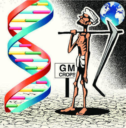 Scientists develop 200 GM crops, await govt nod for trials - Times of India (2013) | Plant Gene Seeker -PGS | Scoop.it