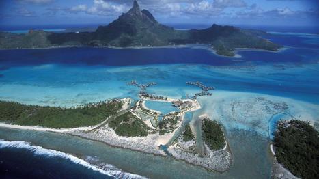 VIDEO. Profession : sauveteur de corail à Bora Bora | Ocean | Scoop.it