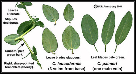 Leaf Terminology (Part 1) | D.I.Y. Herbalism | Scoop.it