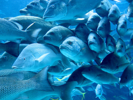 Fish personalities shaped by social interaction | Soggy Science | Scoop.it