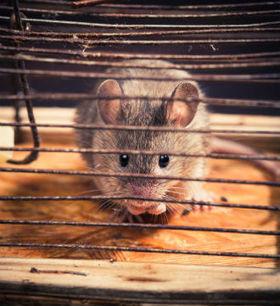 Iowa's Bat Control's pest control service in Des Moines, IA is number one | Iowa's Bat Control | Scoop.it