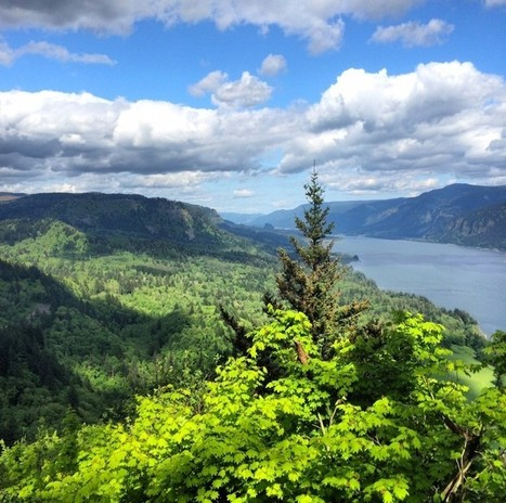Restoring forest landscapes in the US – it's more than just planting trees - Global Landscapes Forum | Natural Capital | Scoop.it