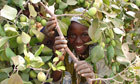 We must make up ground in the fight against desertification: ICRISAT in Guardian Global Development | Henna Bio Fence | Scoop.it