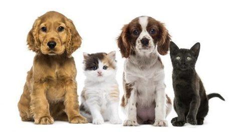 I funerali per animali   Bau Bau News - Amici a 4 Zampe   Scoop.it