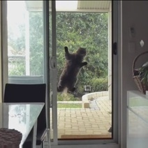 Spider-cat, ou le chat espion (Vidéo du jour) - Wamiz | CaniCatNews-actualité | Scoop.it