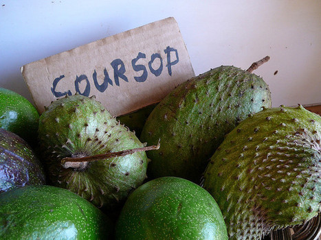 Soursop Fruit 100 Fold Stronger At Killing Cancer Than Chemotherapy | Inspired | Scoop.it
