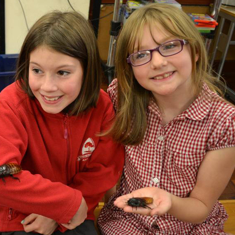 Primary pupils win great bug hunt and BBSRC award best bug photography - The Association for Science Education | BBSRC News Coverage | Scoop.it