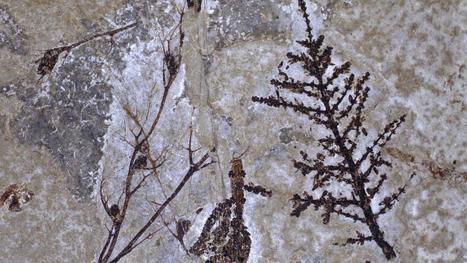 Une plante à fleur datant de 125 à 130 millions d'années a été identifiée | Aux origines | Scoop.it
