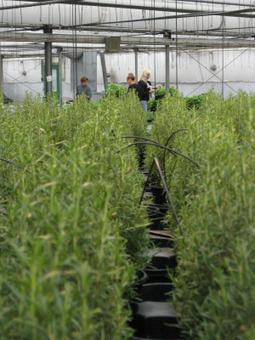 LA Gestion des Ressources Humaines : essentielle au développement de l'entreprise agricole   Entrelesbranches   Scoop.it