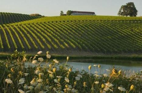 Oregon's Washington County: Gateway to the Willamette Valley | Winecations | Scoop.it