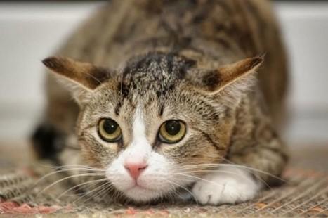Parlez-vous «chat»?   Découvertes et voyages   Scoop.it