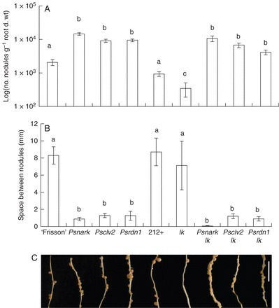 The potential roles of strigolactones and brassinosteroids in the autoregulation of nodulation pathway | Plant microbe symbiotic signals | Scoop.it