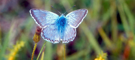 Mais où sont passés les papillons des prairies? | Mes passions natures | Scoop.it