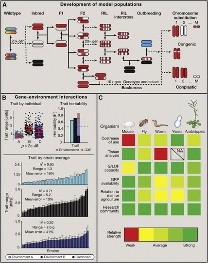 The Convergence of Systems and Reductionist Approaches in Complex Trait Analysis   lignocellulosic biomass   Scoop.it