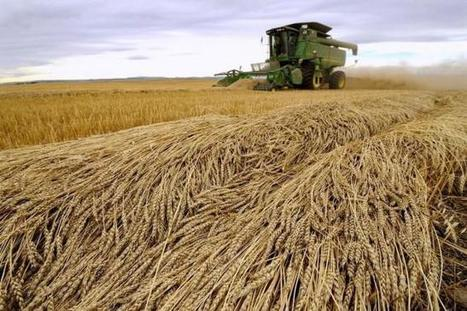 Canada aims to leapfrog U.S. in global wheat trade | WHEAT | Scoop.it