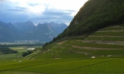 Mondes du vin | le Chablais | World Wine Web | Scoop.it