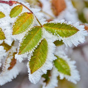 Cold Snap Coming to an End | KFYI (Radio-Phoenix, AZ) | CALS in the News | Scoop.it