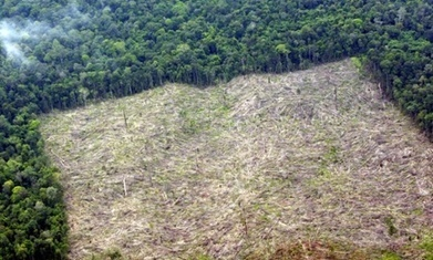 World governments failing Earth's ecosystems, says top conservationist | Conservation | Scoop.it