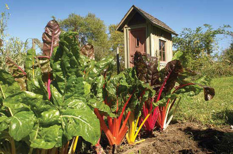 How to Make Money With Organic Gardening   Landscape and Garden Design   Scoop.it