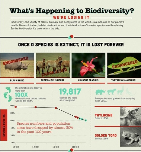Infographic: What's Happening to Biodiversity? | Geography in the classroom | Scoop.it