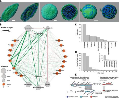 Determinants of community structure in the global plankton interactome | Plant-Microbe Interaction | Scoop.it