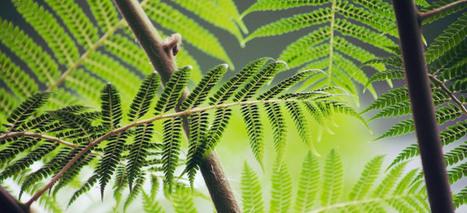 Déployer des mégadonnées pour la biodiversité | ZEBREA | Entrepreneuriat Social, Management & Créativité pour Entreprises sociales | Scoop.it