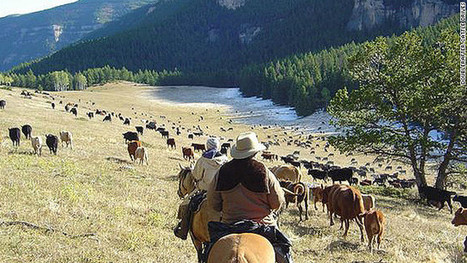 6 best places to be a cowboy (for a while) | western saddles | Scoop.it