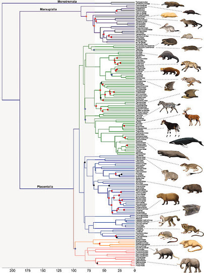 Molecular Evolution Forum: The Phylogeny and Timing of Mammalian Evolution | Plant Genomics | Scoop.it