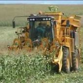 China quarantines Argentine corn because of unapproved genetically modified strains   MAIZE   Scoop.it