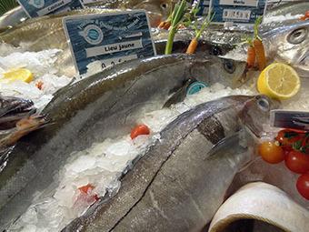 Comment manger du poisson sans s'intoxiquer au mercure ? | Actus Bien-être - Santé | Scoop.it
