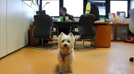 Empiezan a extenderse las empresas 'dog friendly' que permiten a sus empleados llevar mascotas al curro | I didn't know it was impossible.. and I did it :-) - No sabia que era imposible.. y lo hice :-) | Scoop.it