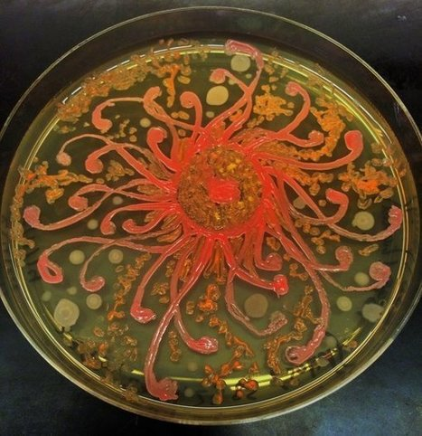 Artist Paints With Bacteria, And It's Oddly Beautiful | Twisted Microbiology | Scoop.it